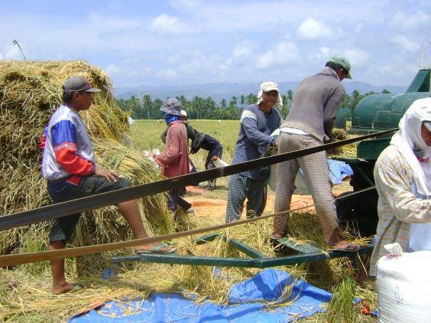 Organic-Rice