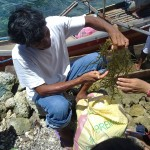 SEAWEED Project (7)